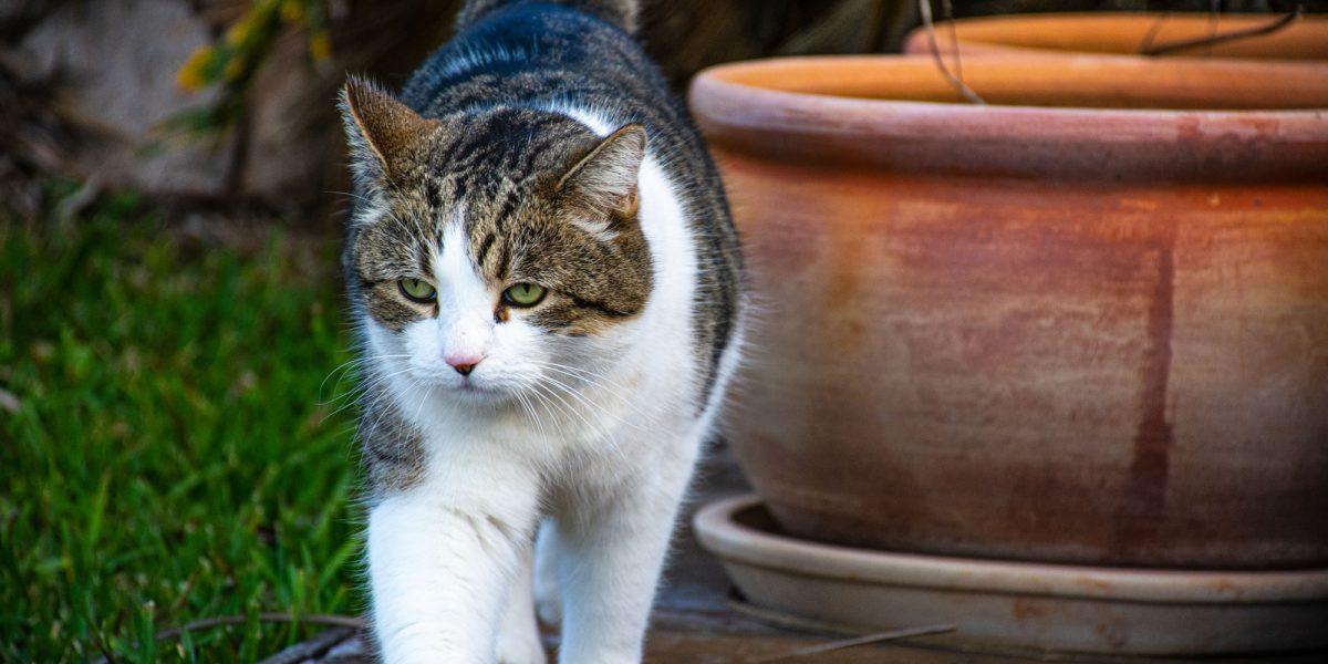 Naavi The Cat