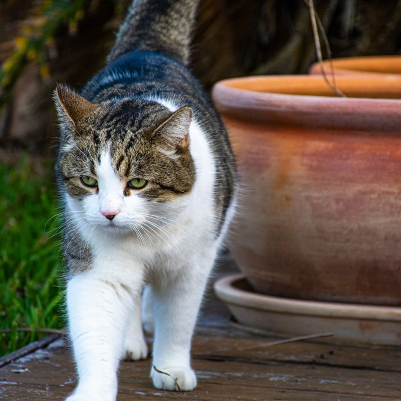 See more of Naavi The Cat